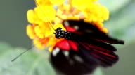 Butterfly macro (1080p) video