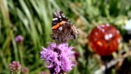 Butterfly on a Flower video
