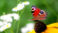 Butterfly on a Flower video