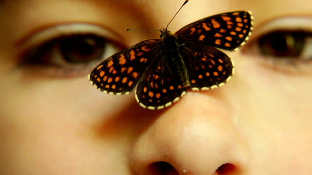 Butterfly on a girls nose video