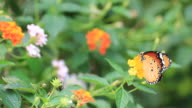 Butterfly with colorful flower video