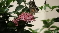 Butterfly on flower tree video