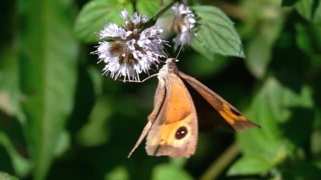 Butterfly on flower video