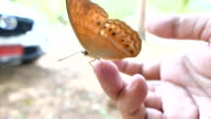 Butterfly on girls finger video