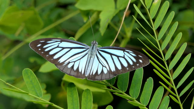 Butterfly on leaves in tropical rain forest. video