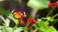 Butterfly on red flower video