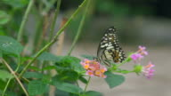 Butterfly On Small Flower Slow video