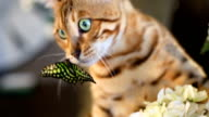Butterfly On The Muzzle Of A Cat video