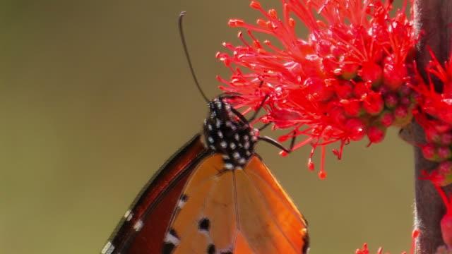 Butterfly - Schmetterling video