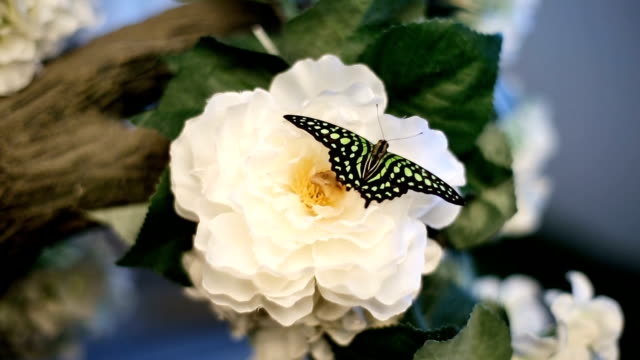 A Butterfly Sits On A Flower video