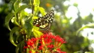 Butterfly Sitting On Red Flower video