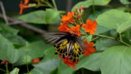 Butterfly, slow motion video