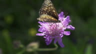 SLOW MOTION: Butterfly video