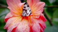 Butterfly with flower,slow motion video