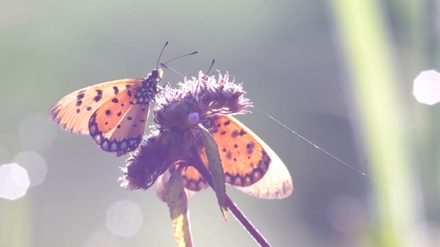 butterfly with the morning light video