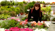 Buyer in a flower shop video