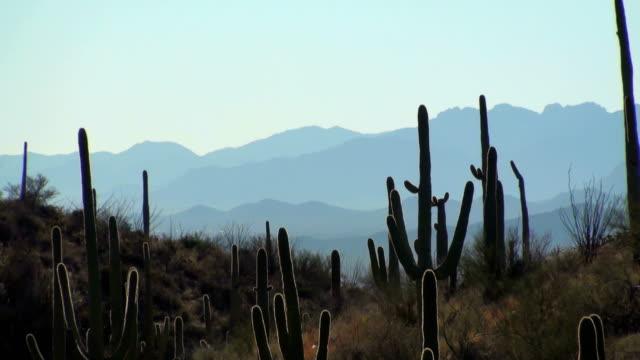 Cactus landscape zoom out - HD video