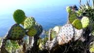 Cactus overlooking ocean video