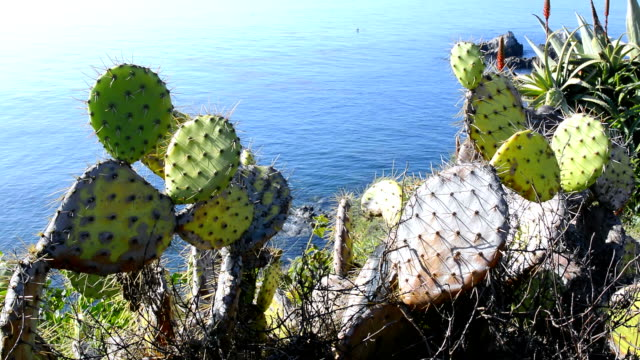 Cactus overlooking ocean video
