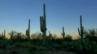 CLOSE UP: Cactus silhouette against colorful sky before the sunrise video