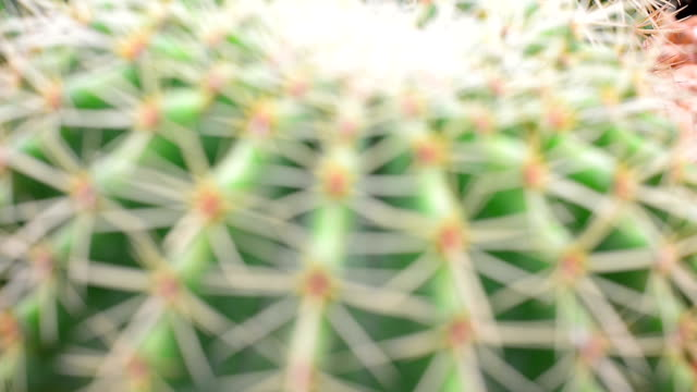 Cactus video
