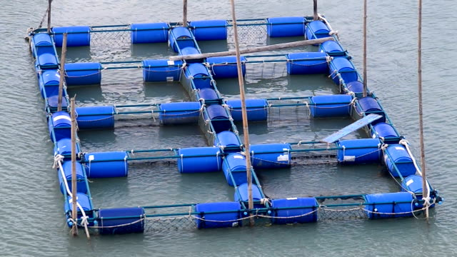Cage fish farming in Thailand video