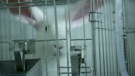 cage for rabbit in the lab video