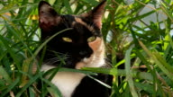 Calico cat outdoors video