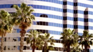 California Business office tower dwarfing palm trees swaying in the wind video