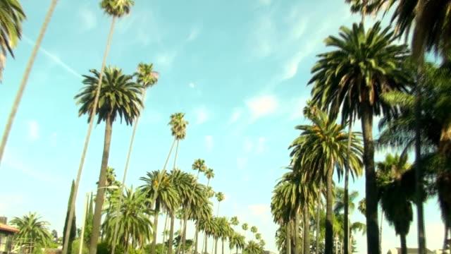 California palm trees - HD video