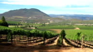 California Vineyard video