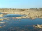 California Wetlands video