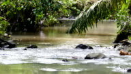 Calm river flowing with moderate current in a rainforest with palmtrees and leaves video