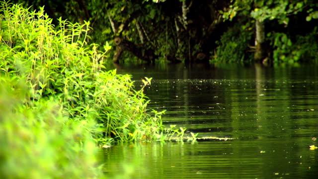 Calm stream in Tahiti video