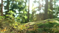 Calm Tranquil Forest Scene video
