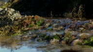 Calm Water Flowing Over Mossy Coral video