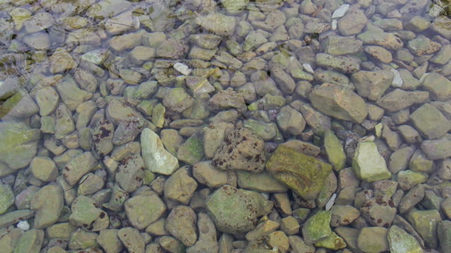 calm water movement at rocky beach two video