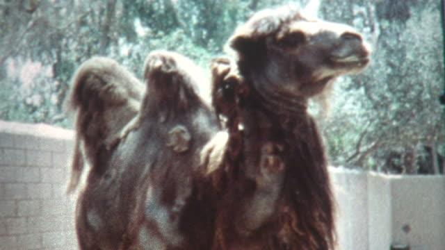 Camel Hair 1960's video