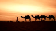 Camel herder in desert video