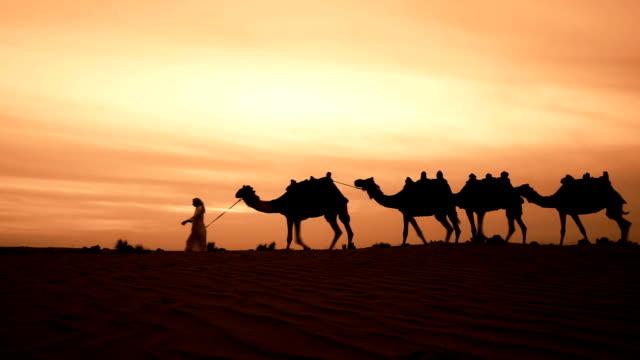 Camel herder in desert video