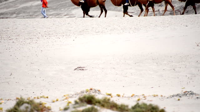 camel ride walking pass video