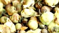 Camellia Tea. video