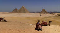 Camels in desert with pyramids background video