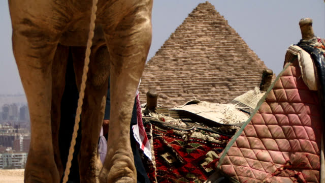 Camels legs with pyramid in background video