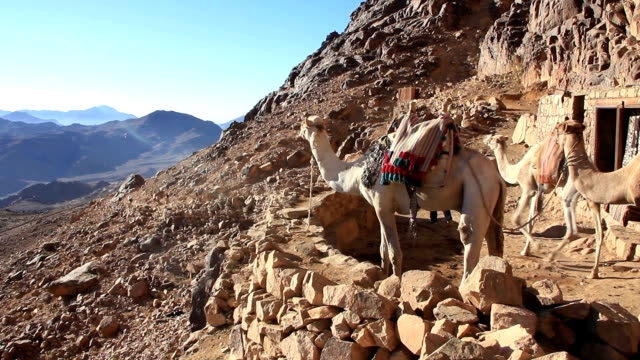 Camels on Mount Sinai (Moses Mountain) on Sinai Peninsula, Egypt video