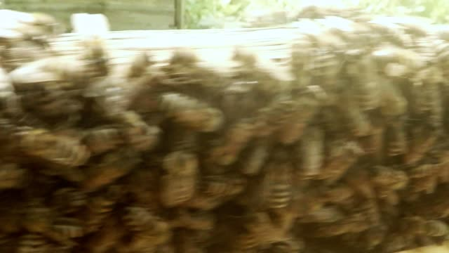 Camera Flies Along Bees on Opened Hive Close up video