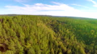 Camera flying high above large spruce tree forest video