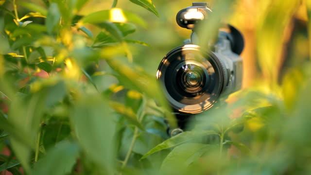 Camera hiding in green bush video