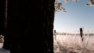 Camera moves from left to right and takes a winter landscape with trees trunks and a field video