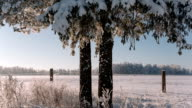Camera moves from right to left and takes a beautiful winter landscape video